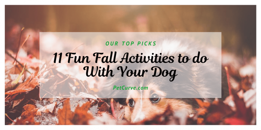 11 Fun Fall Activities to do with Your Dog!