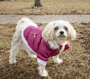 Shopping for the right Dog Coats