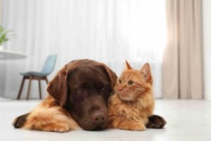 Does Emotional Support Dogs Add Value to Treatment For Sleeping Disorders?