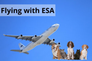 Flying with an emotional support animal? Here's what you need to know