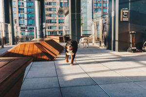 Renting an Apartment With Emotional Support Animal – What You Should Know
