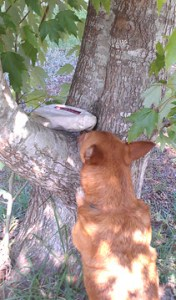 Rusty using his natural instincts.