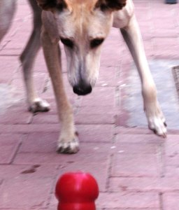 Research shows that dogs (and most other animals) prefer to work for their food, a principle known as contrafreeloading