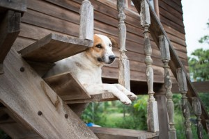 Sometimes dogs are content just to watch the world go by © Can Stock Photo
