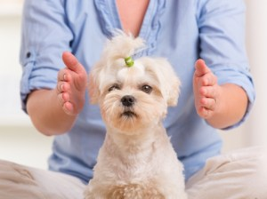Use of Reiki in Pets