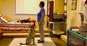 My Dogs Do Know Sit! A Hint for Training the Sit Stay
