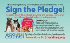 Building a Shock-Free World for Pets
