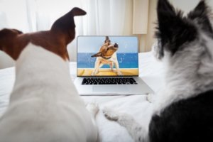 Dog Trainers: Still Here to Help – Virtually!