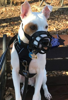 """Muzzles Schmuzzles…Not """"Just Another Piece of Kit!"""""""