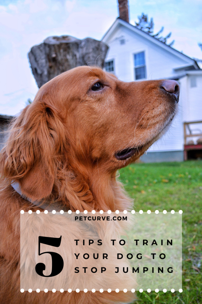 5 Tips – Train My Dog To Stop Jumping