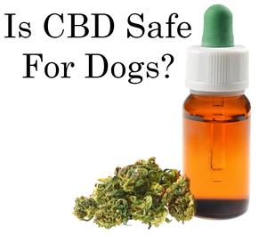 Is CBD Safe For Dogs