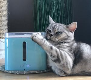 The importance of Hydration in both Dogs and Cats?