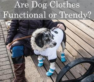 Are Dog Clothes trendier than they are functional?