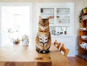How you should approach your landlord about an Emotional Support Animal Letter?