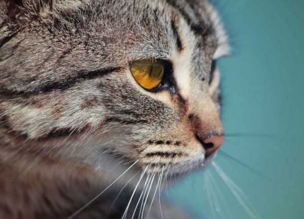 how-an-emotional-support-cat-letter-can-help-you-manage-your-mental-condition