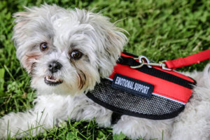 Does Texas Recognize Emotional Support Animals?