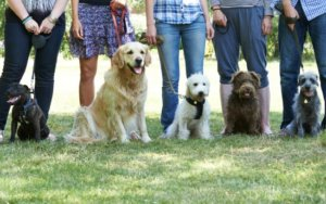 """Why You Should Avoid """"Obedience"""" Training Tactics for Dogs and Consider this Alternative Instead"""