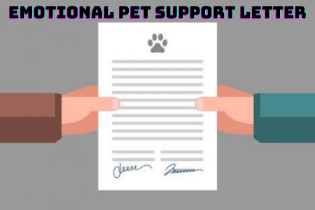5 Things You Should Learn Before Getting an Emotional Pet Support Letter