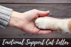 Can a Cat Get An Emotional Support Letter?