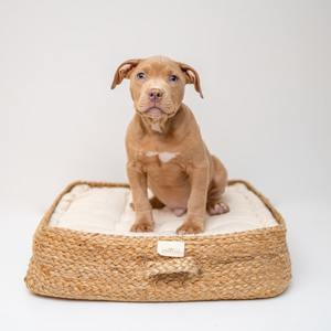 How To Choose A Dog Bed: A Step By Step Guide