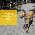 10 Best Dog Boots 2021: Buyer's Guide10 Best Dog Boots 2021: Buyer's Guide