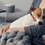Can I Have an ESA & a Service Animal at Home?
