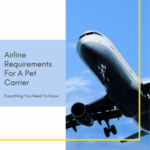 Airline Requirements For A Pet Carrier: Everything You Need To Know