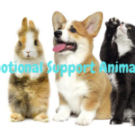 Animals Other Than Dogs That You Can Make Your Emotional Support Animal