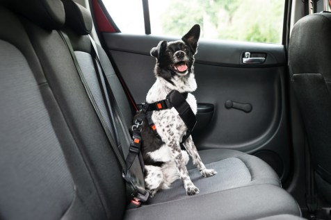 Stress-Free Car Travel with Your Dog