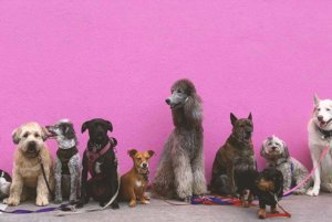 Top 10 Most Friendly Dog Breeds for Emotional Support