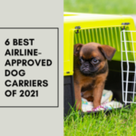 6 Best Airline-Approved Dog Carriers of 2021