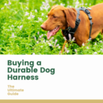What's Better For Dogs: Collar Or Harness?
