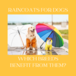 Raincoats for Dogs: Which Breeds Benefit From Them?