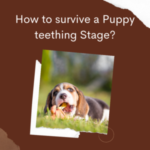 How To Survive The Puppy Teething Stage?