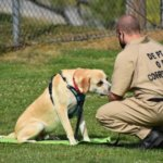 Saving Detainees and Dogs, One Life at a Time